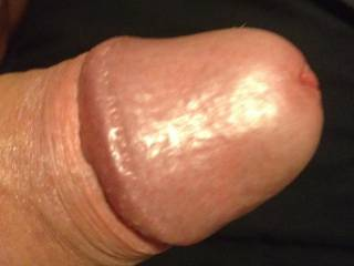 This cock loves tributing willing ladies.