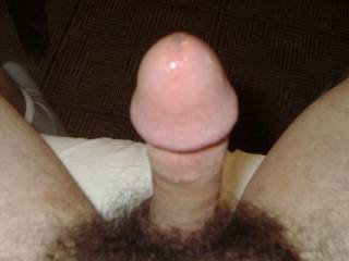 This cock wants to be buried in a massive hairy bush!!