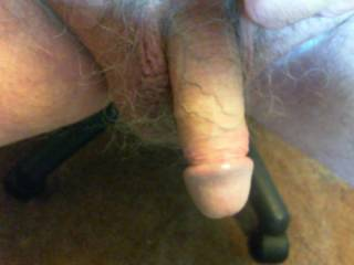 My cock ladies. He is looking for a warm mouth or pussy.