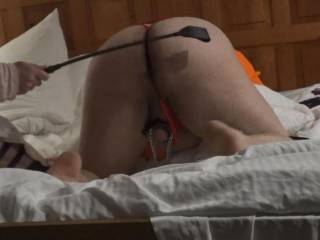Subhubby is now bent over and being spanked hard by Mistress. Anyone want to join?