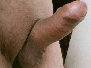 Erected thick cock pointing up, it is ready to fuck!