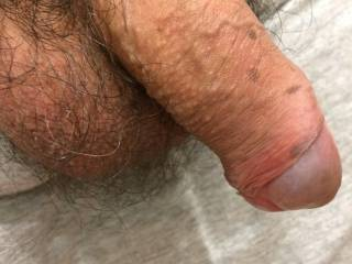Hairy cock and balls for some lovely girls here...