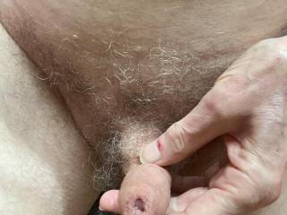 How would you like to suck on Mr Floppy and explore \'His\' foreskin with your tongue?
