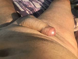 Sexy Zoig friends chat get my cock nice and stiff  Would you get it stiff for me ?