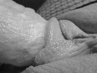 pussy lips and cock