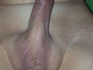 Thought I would share my freshly shaved and hard cock