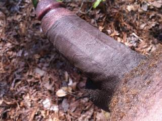 Mmmmm, I'd get naked with you and have you fuck me doggy-style out in the woods.  But before we fuck, I'd have to suck on that hard cock for a while.  MILF K