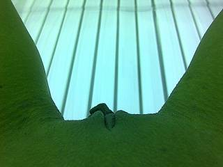 another tanning bed shot looking down to my pussy.  Someone should be looking back up at me with the tongue in my pussy;)