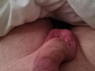 Early morning cock