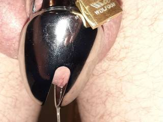 He\'s actually dripping precum, the pervert!  He\'s getting off on being caged like this... let\'s see how he feels after a few days!