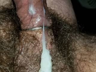 Engorged cock,  cum flowing over hairy balls