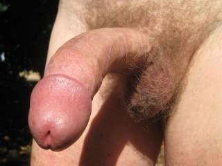 Rock hard and ready for some action - preferably of a sexual kind !  When doing it doggy this cock is good for finding the G spot - try it and see if I'm wrong.
