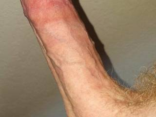 Hot circumcised erect hard penis dick cock close-up