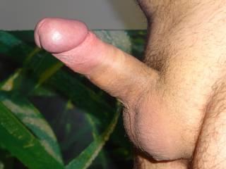 erect