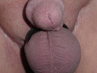 What can you do to make this shaven circumcised dick hard for fucking or blowjobs and/or to satisfy those balls in their ring ?
