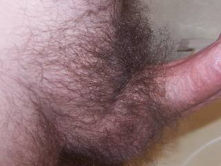 Before I trim my hairy cock! Any helpers!