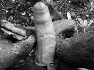 I was jerking in a public park and settled my cock betwenn the arms of a tree...