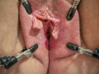 Nipple clips work great to spread her lips for some closeup pleasure. Easy access for p-hole play too.
