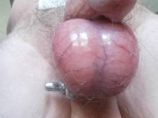 heavy ring clamps on nutsack....feels fantastic!