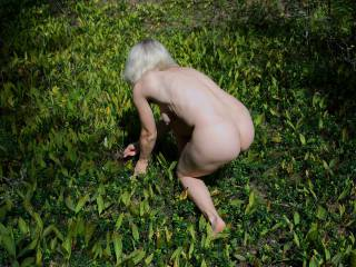 Naked slave with hanging tits collecting berries