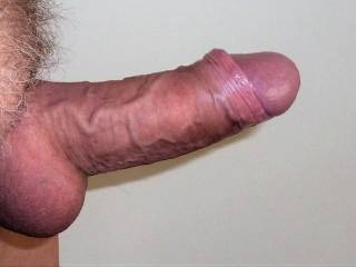 My stiff thick cock waiting for usage.