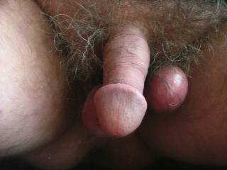 Cock showing large glans