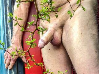 Showing my swollen penis to the neighbor if she is watching. I never know.