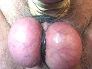 Masturbation wearing rubber and metal cock rings
