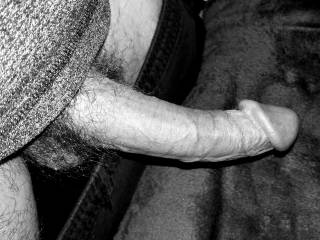 Black and white cock