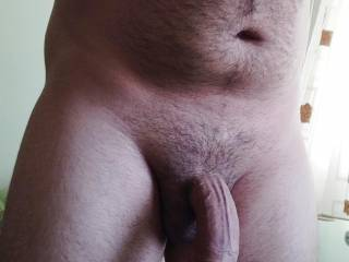erected curved dick