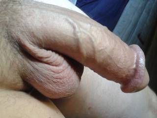 Waiting for you're female mouth & Pussy to erect it for maximum penetration.