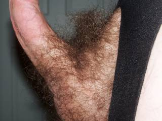 love to slow suck that all night and lick slow on them hairy balls!!