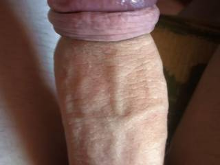 My mild  cock tight retracted with head squeezed and swollen