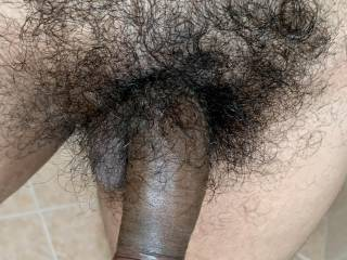 Half erected hairy penis