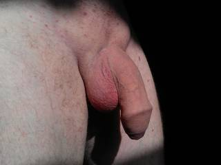 Morning sun on my shaved cock