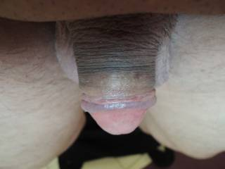 oh what a lovely head, so wide and a delicious purple ridge, mmm, so sexy. Would love to make you grow in my hands