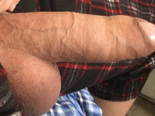 thick cock bull dick