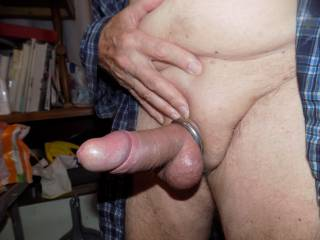 cock hard with ring