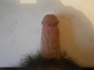 my hard cock after looking at lovely ladies on zoig  who would like feel it spread there pussy lips apart?