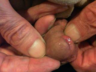 just some precum whilst filming...
