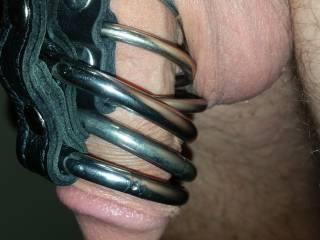 Wife realized that ice cold metal rings keeps the big fella in check and For me its like piercings or lingerie for the cock. Now I have permission i fear she has bad intentions for me later on.