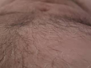 Getting hairy again...should I shave or let it grow??
