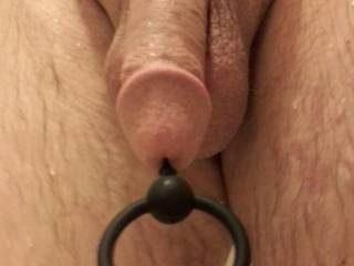 After a shower, I like how my plugged cock feels and looks. Want to pull my ring?