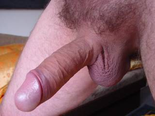veiny cock with big head and balls - curious for you!