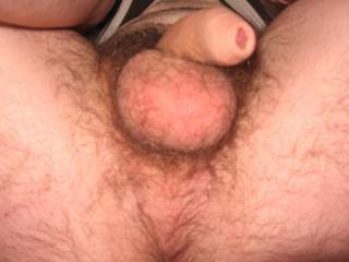 Any one want to suck my huge balls?