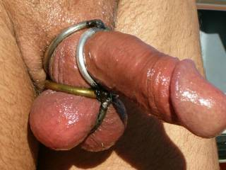 my little ringed cock and balls