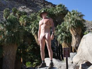 Nude hiking at Joshua tree at a Palm Oasis.