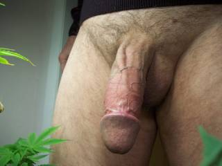 Let it hang out in my mouth. Mmmmm, I'd have fun sucking that cock off.  That is a sexy cock.  MILF K