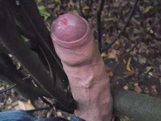 fucking plants public park outdoor