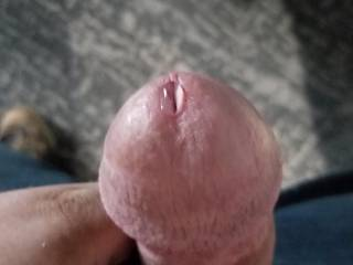 my husbands cock dripping precum. its so tasty